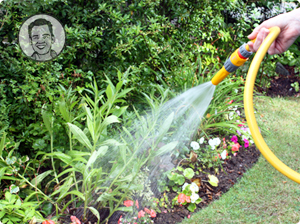 Watering plants with a hose