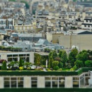 Why Planting a Roof Garden?