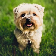 Lush Lawns & Happy Dogs in Just 3 Easy Steps