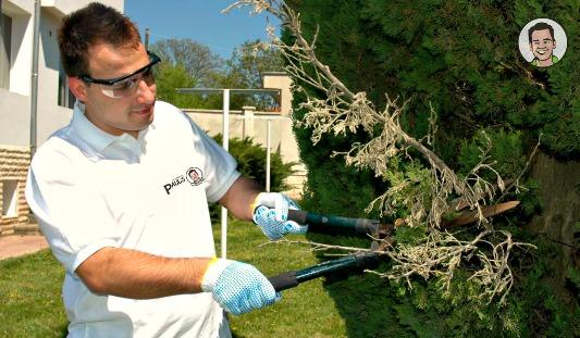 Paul's mowing servicex pro